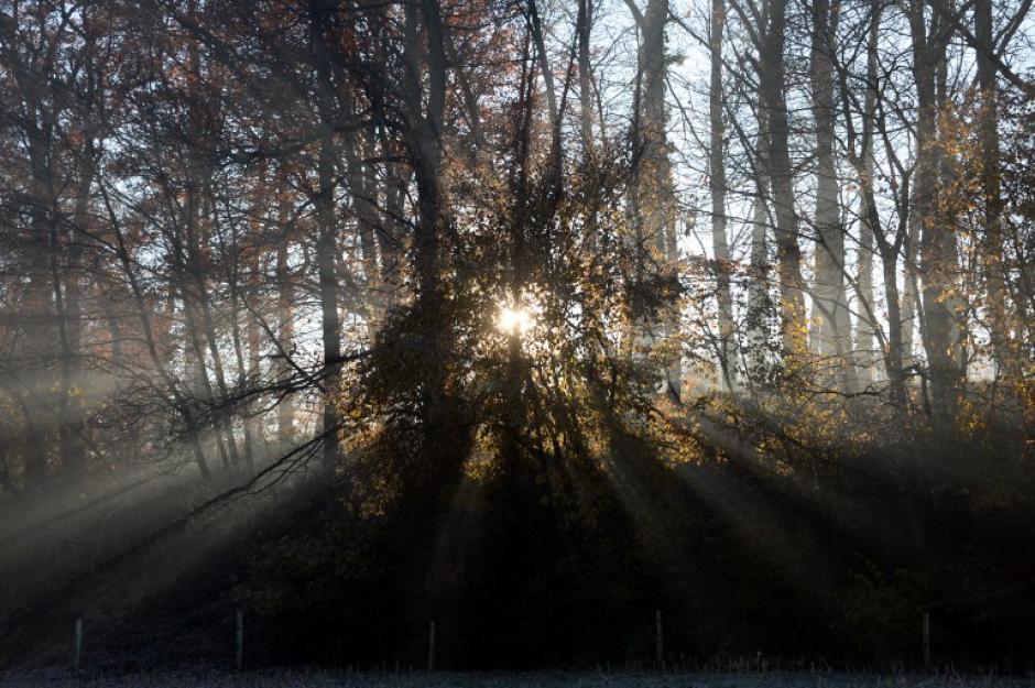 Los rayos del sol pasan a través de los árboles del bosque heldado en Hede-Bazouges en Francia
