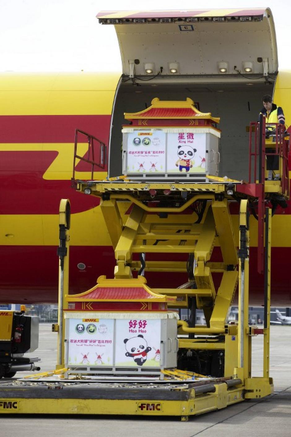 Pandas llegan al aeropuerto de Bruselas. (Foto: AFP)