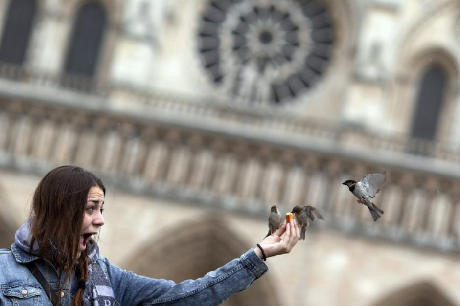 Un turista alimenta gorriones Frente a Notre-Dame, en París. (Foto: AFP/KENZO TRIBOUILLARD)