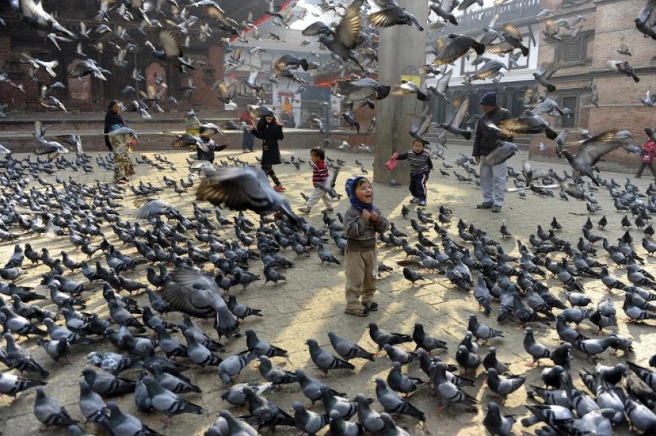 Niños nepaleses en la ciudad de Katmandu alimentan a las palomas que se aglomeran en grandes cantidades en la Plaza de Durbar, uno de los centros más concurridos de la ciudad. Foto AFP