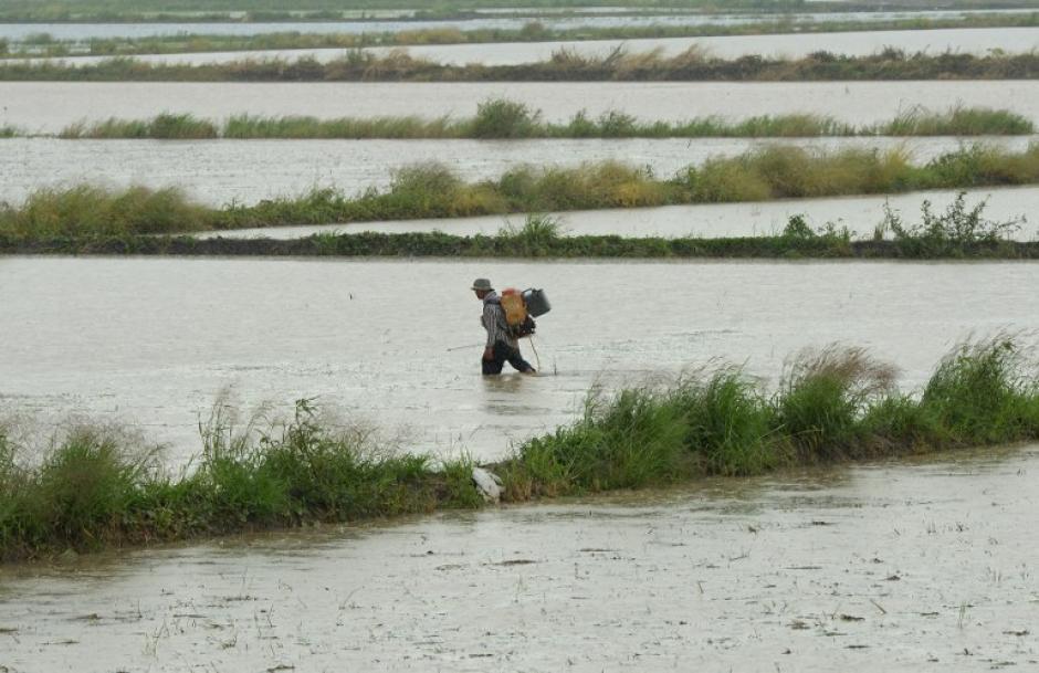 Granjero tailandés camina a través de un campo de arroz inundado en la provincia de Ayutthaya, al norte de Bangkok.