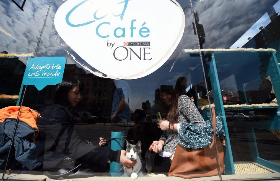 El café-cat ha sido muy visitado por los amantes de los gatos. (Foto:AFP)