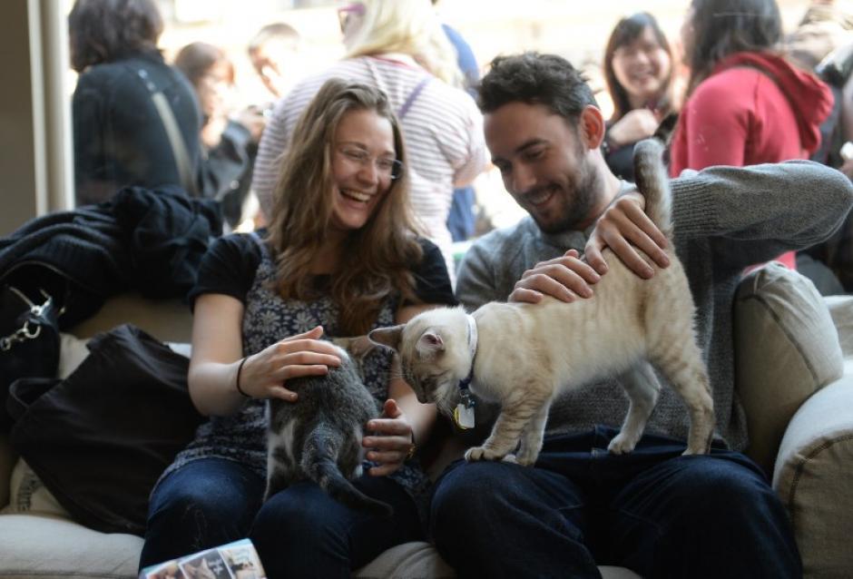 Una pareja visitó el lugar para acariciar a los felinos que se ofrecen en adopción. (Foto:AFP)