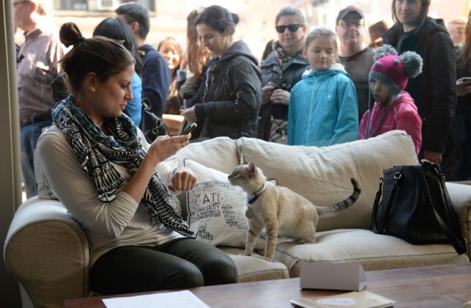 Una mujer fotografía a uno de los gatos, mientras afuera decenas hacen fila para poder entrar al café-cat. (Foto:AFP)