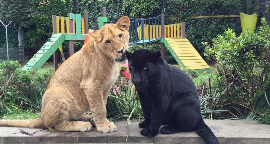 En el recinto viven toda clase de felinos salvajes. (Foto: Facebook)