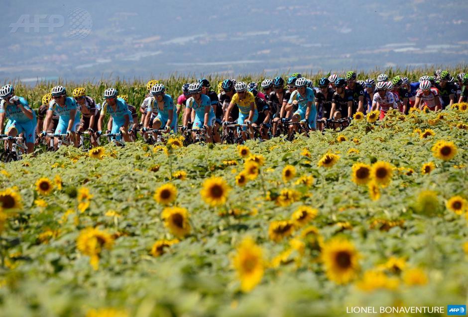 Los corredores del Tour de Francia pasan por un hermoso campo de girasoles durante la etapa 13 de la competencia. (Foto: AFP)