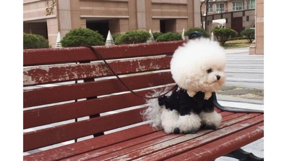 Tori es una perrita que tiene más de 70 mil seguidores en Instagram. (Foto: www.sdpnoticias.com)