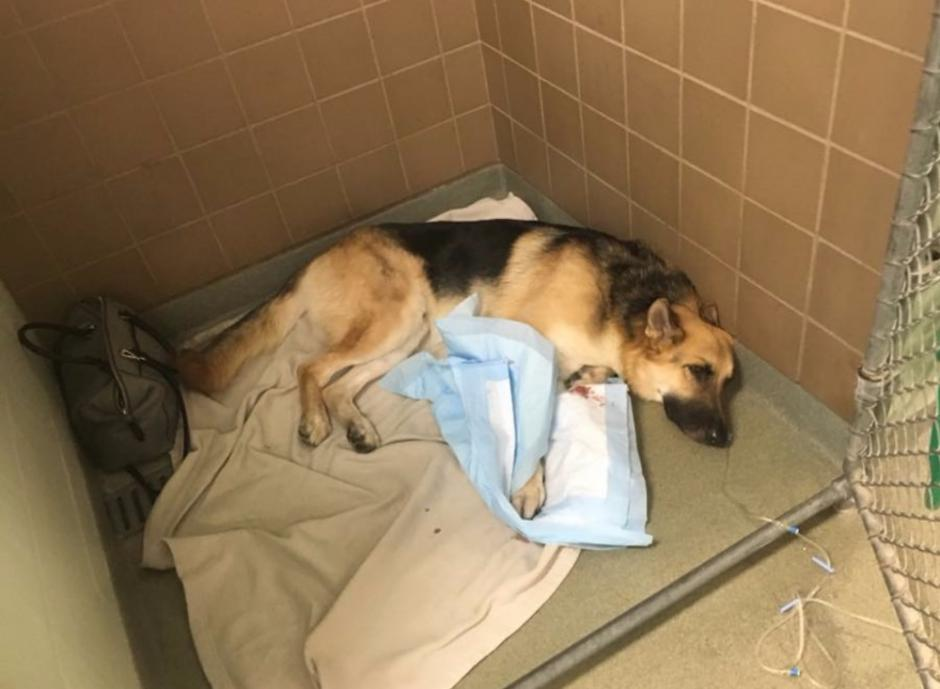Haus está delicado de salud en el centro de cuidados intensivos donde la familia lo internó. (Foto: GoFundMe)