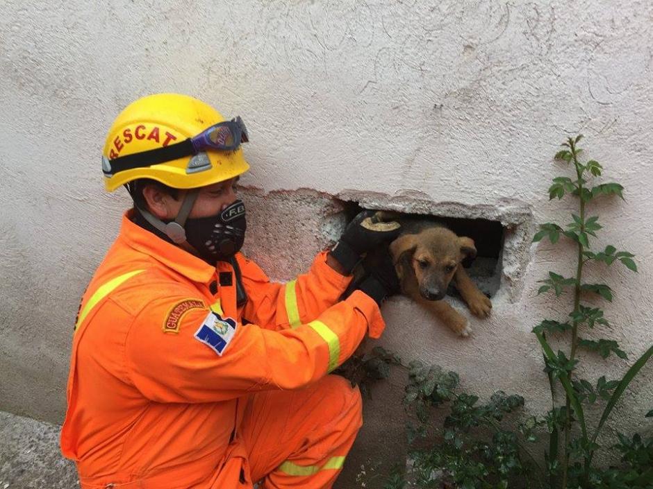 Los Bomberos Voluntarios tuvieron que romper una pared para rescatar al travieso perro. (Foto: Bomberos Voluntarios Santa Cruz del Quiché)