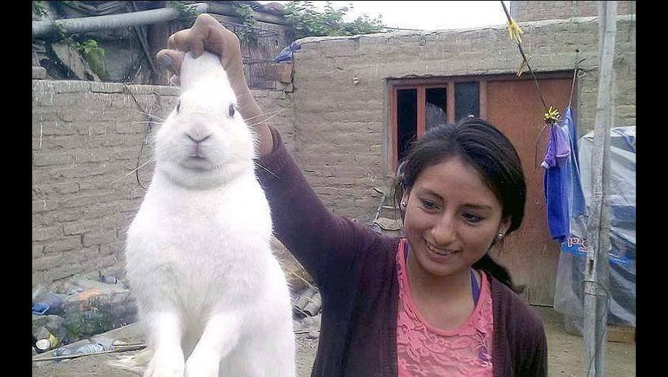 El conejo consumidor de marihuana desapareció luego de un tiempo. (Foto: trome.pe)