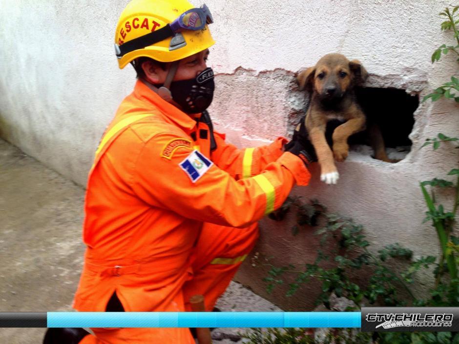 El perrito se sintió aliviado al ver nuevamente la luz del día tras estar atrapado entre dos muros durante varios minutos.(Foto: CTV.Chilero)