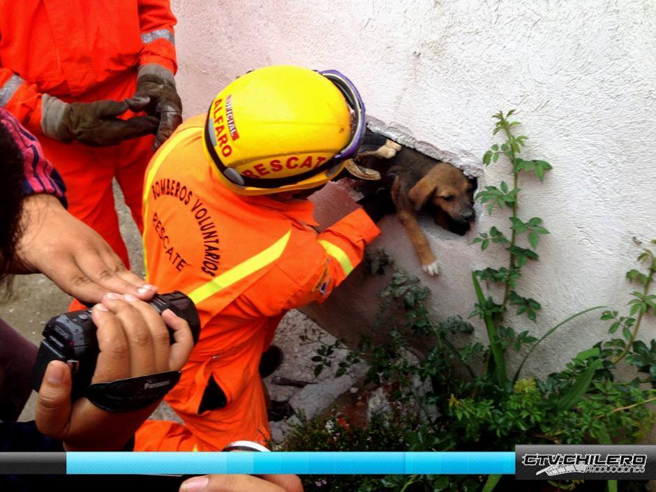 Los rescatistas utilizaron un equipo especial para localizar y liberar al cachorro. (Foto: CTV.Chilero)