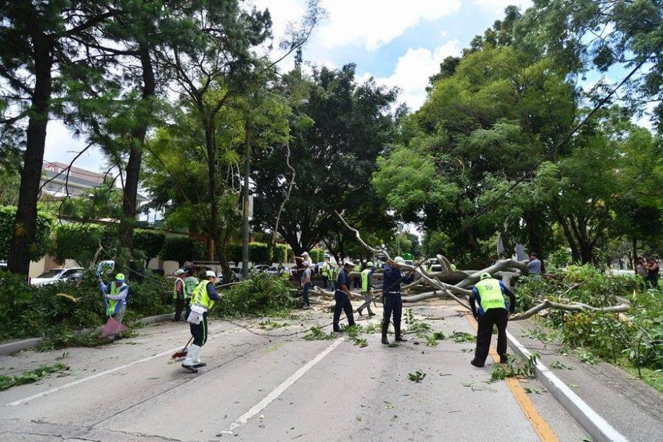 El árbol bloqueó totalmente tres carriles de la Avenida Reforma. (Foto Wilder López/Soy502)