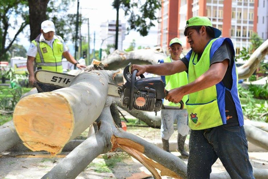 Peronal de Limpia y Verde trabaja en el retiro del árbol. (Foto Wilder López/Soy502)