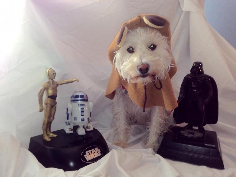 Las mascotas son disfrazadas de Star Wars. (Foto: Facebook/Kathleen Leigh Lash)