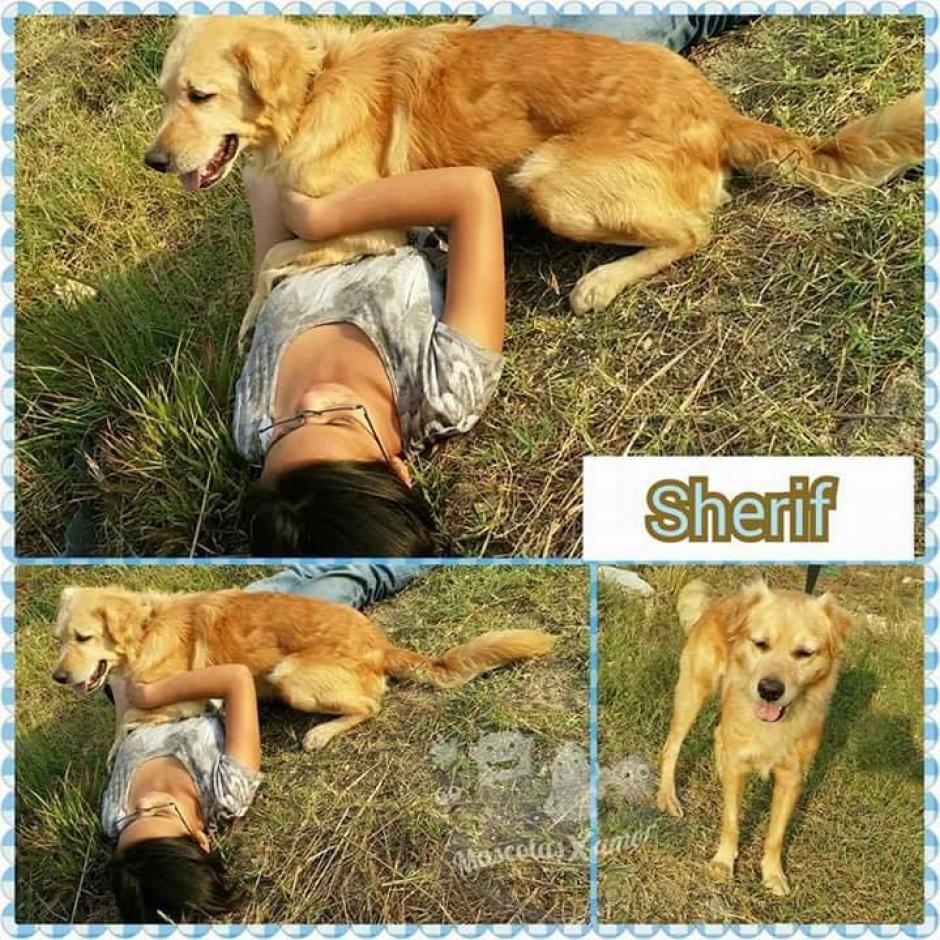Sherif será el guardián de tu corazón. (Foto: Mascotas por amor)