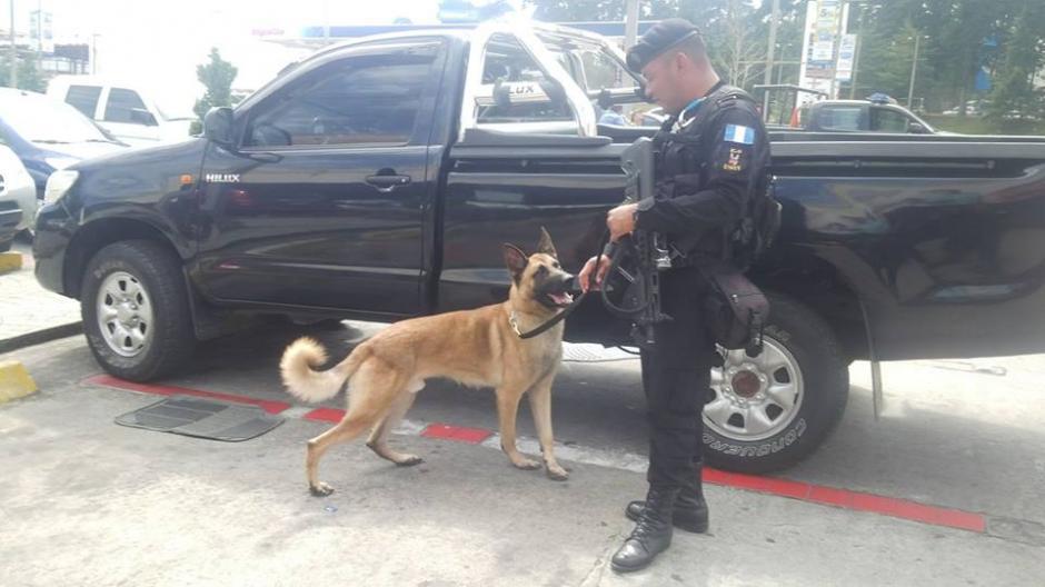 """""""Edo"""" es el perro que utilizó la PNC para inspeccionar el vehículo donde se encontraron los dólares. (Foto: PNC)"""