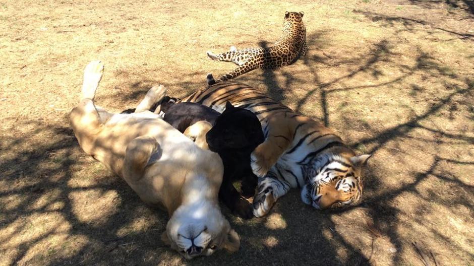 El refugio les brinda un ambiente sano y alimentación. (Foto: Facebook)