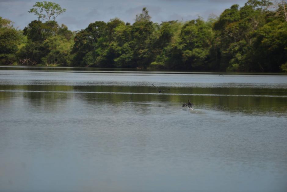 Los peces comenzaron a morir masivamente y agolparse en las orillas. (Foto: Wilder López/Soy502)