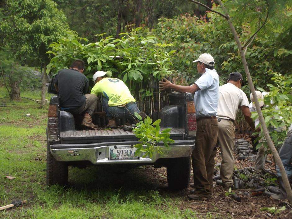 """Este sábado será el día de """"Árbol Cero""""; donde se sembrarán árboles en diferentes zonas del país de manera simbólica. (Foto: Facebook)"""