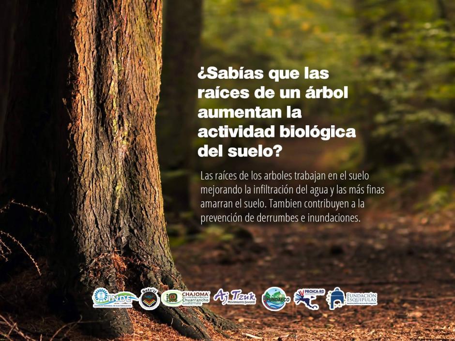 """Chuarrancho será una de las sedes principales este sábado para el día del """"Árbol Cero"""". (Foto: Facebook)"""