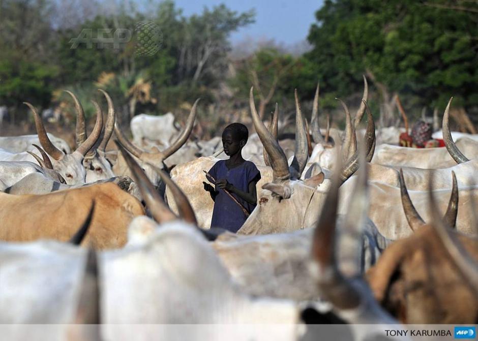 Un niño de la tribu Dinka se distrae dentro de una manada de ganado propiedad comunal de la localidad en el sur del Sudán. Desde hace casi tres años, el sur de Sudán registra hechos de violencia étnica. (Foto: AFP)