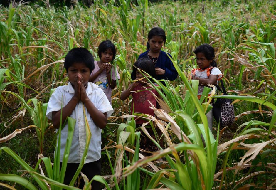 El maíz tiene propiedades que previenen distintos tipos de enfermedades. (Foto: Archivo/Soy502)