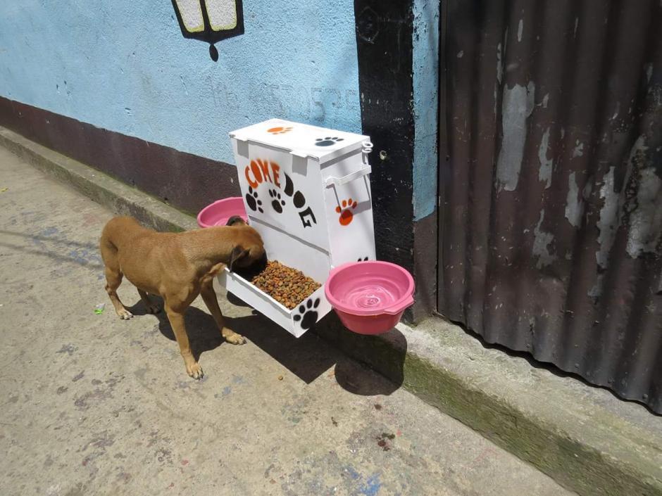 El ComeDog es el espacio donde los perros sin dueño de Santo Tomás Milpas Altas pueden alimentarse sanamente. (Foto: Noticiero El Gráfico de Sacatepéquez)