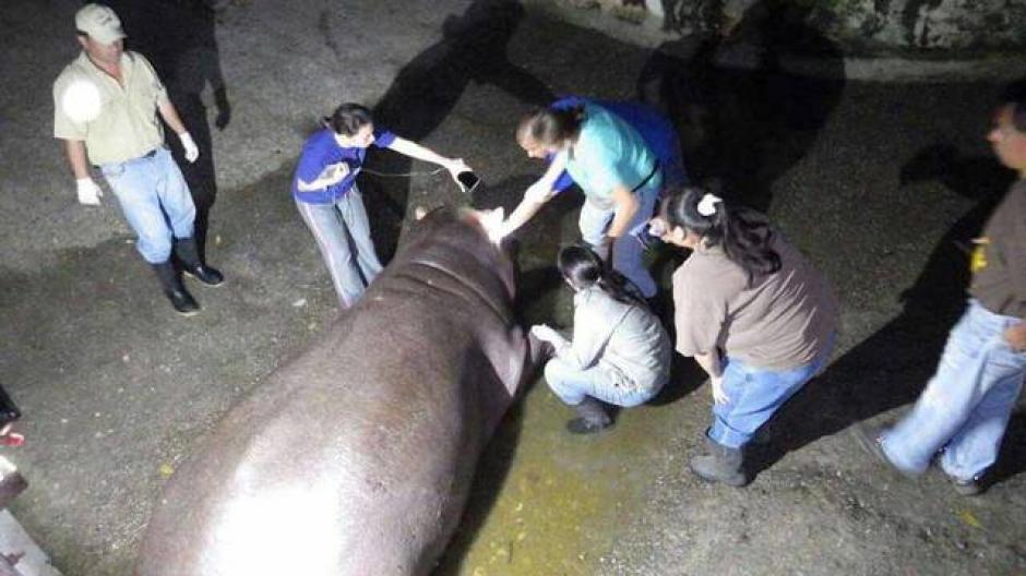 Ahora las autoridades investigan si hubo negligencia en el cuidado de Gustavito. (Foto: El Salvador.com)