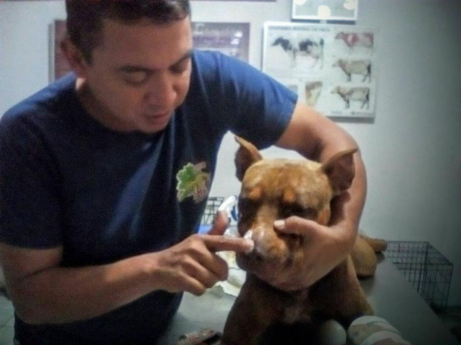 El perro fue atendido por un veterinario quien le presta el tratamiento para sus heridas. (Foto: BMD Monjas, Jalapa)