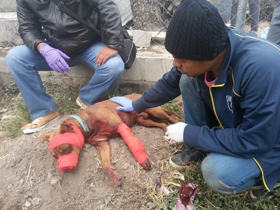 Bomberos Municipales departamentales de Monjas, Jalapa, auxilian a un perro baleado. (Foto: BMD Monjas, Jalapa)