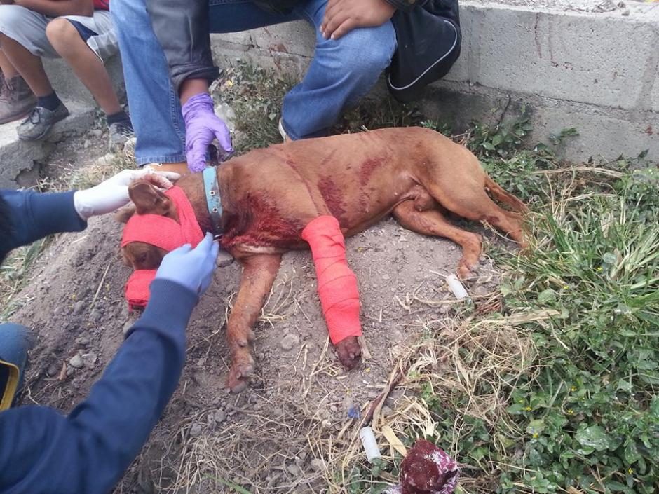 El perro presentaba al menos cinco heridas de bala informaron Bomberos Municipales de Monjas, Jalapa.  (Foto: BMD Monjas, Jalapa)