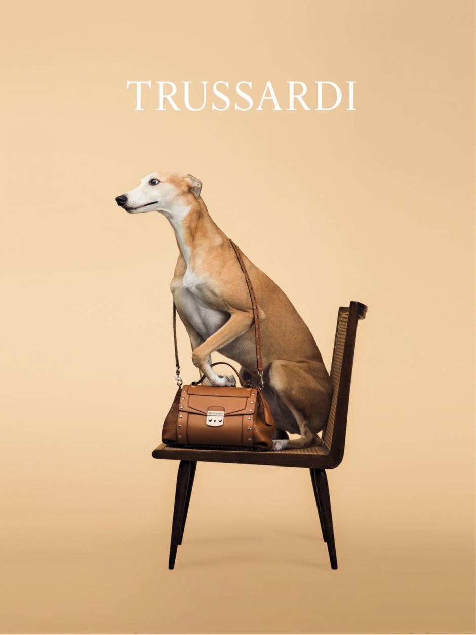 Los galgos siempre han formado parte de la marca Trussardi, pero ésta es la primera vez que los exponen como modelos de las prendas. Foto Trussardi