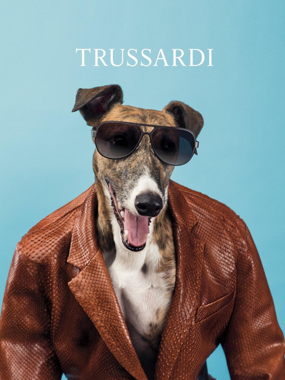 """Así lucieron los galgos con """"glamour"""" y muy fashion las prendas de la firma Trussardi. Foto Trussardi"""