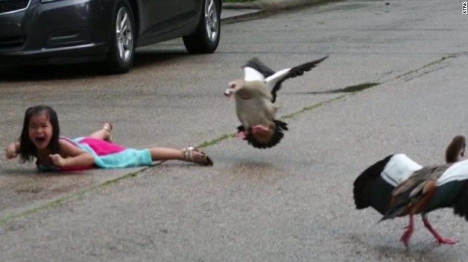 """""""Un pequeño patito estaba herido, y empezamos a seguirlo"""", dijo la niña  (Foto: CNN)"""