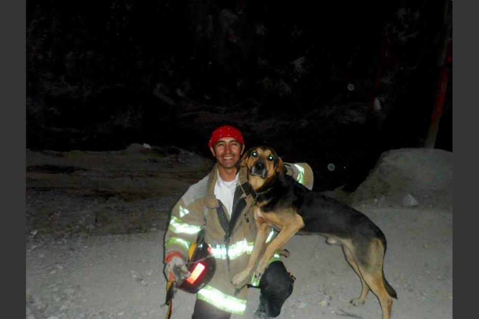 Perro rescatista fue envenenado foto