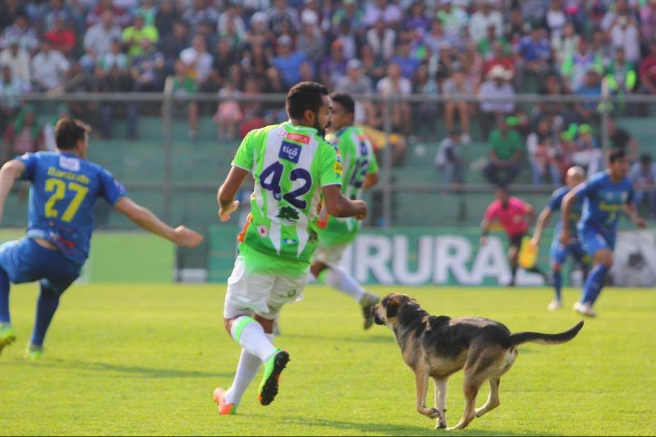 El perro trató de acercase a Hugo Acosta, jugador de Antigua. (Foto: Antigua GFC)