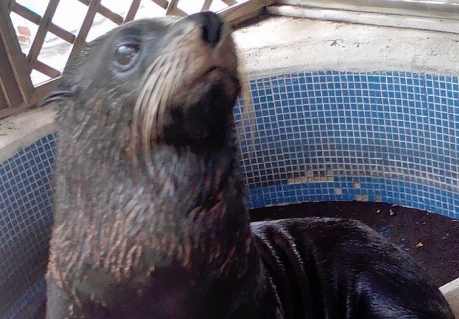 Esta especie es inofensiva al notar la presencia de las personas. (Foto: Reserva Natural Monterrico)