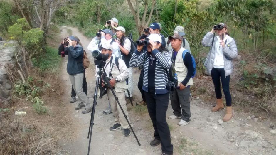 En Guatemala existen cinco rutas recomendadas donde podrás enamorarte de las aves.  (Foto: Inguat)