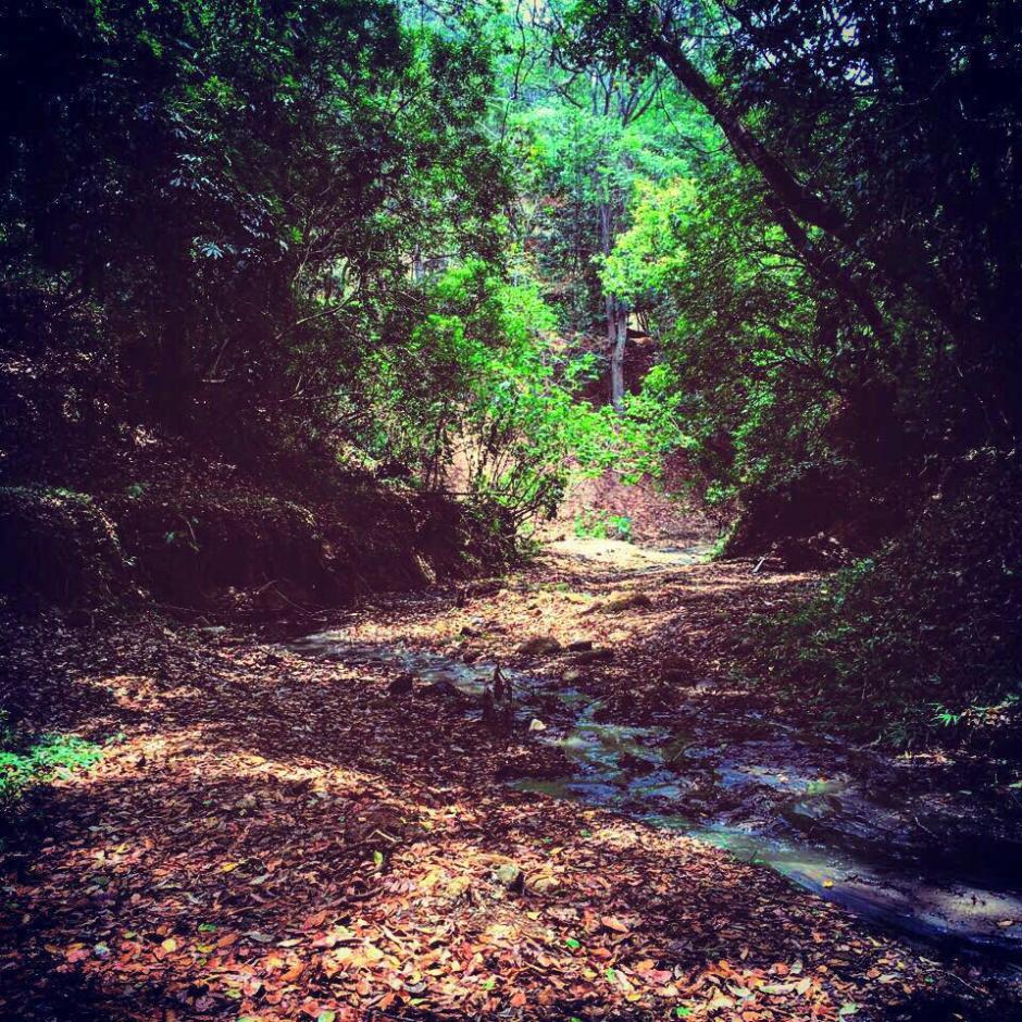 El parque ecológico Jacarandas de Cayalá es una opción para no salir de la ciudad. (Foto: Jacarandas de Cayalá)