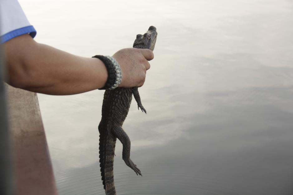 El canal de Chiquimulilla también es refugio para los caimanes. (Foto: Fredy Hernández/Soy502)