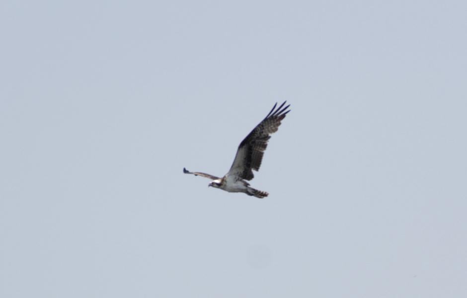 Las aves sorprenden cuando sobrevuelan la zona. (Foto: Fredy Hernández/Soy502)