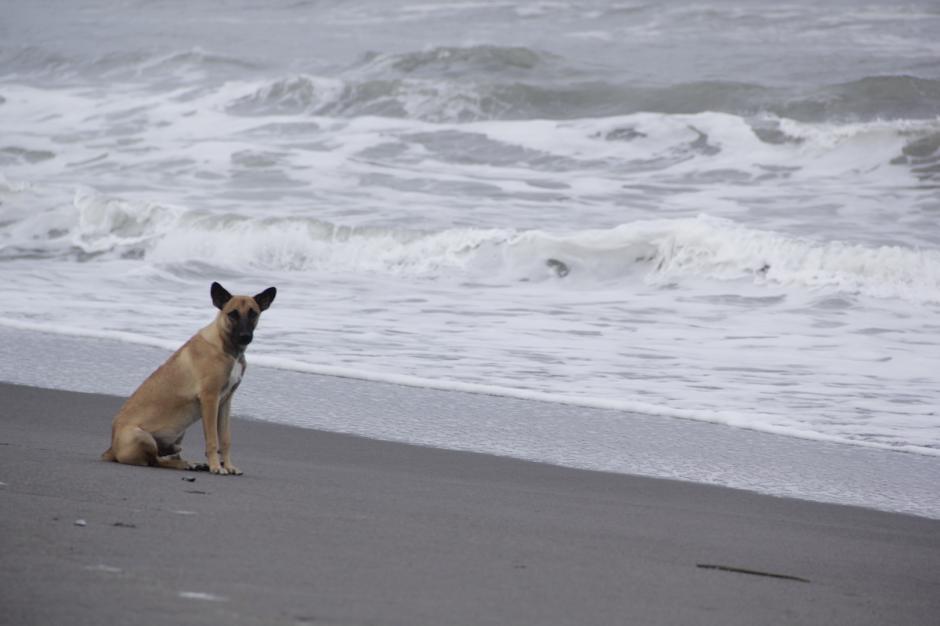 Un perro camina libremente por la playa de La Tilapa, en La Blanca, San Marcos. (Foto: Fredy Hernández/Soy502)