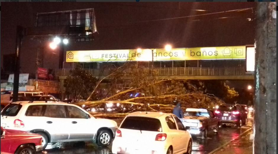 Varios árboles se desplomaron en las zonas 7, 11, 12 y 21. (Foto: Twitter/Amílcar Montejo)