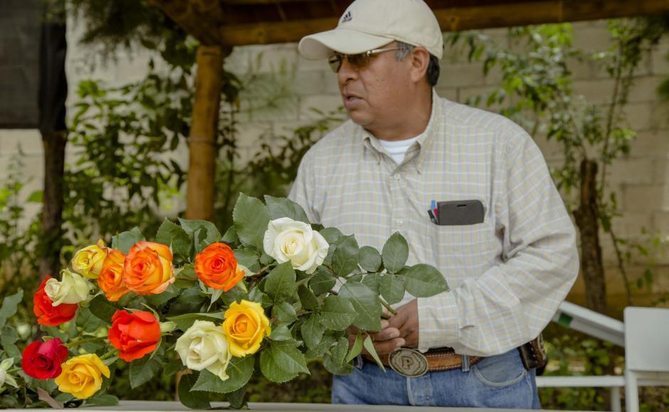 Invernadero Rosas San Pablo beneficia directamente a más de 20 familias. (Foto: Víctor Xiloj/Soy502)