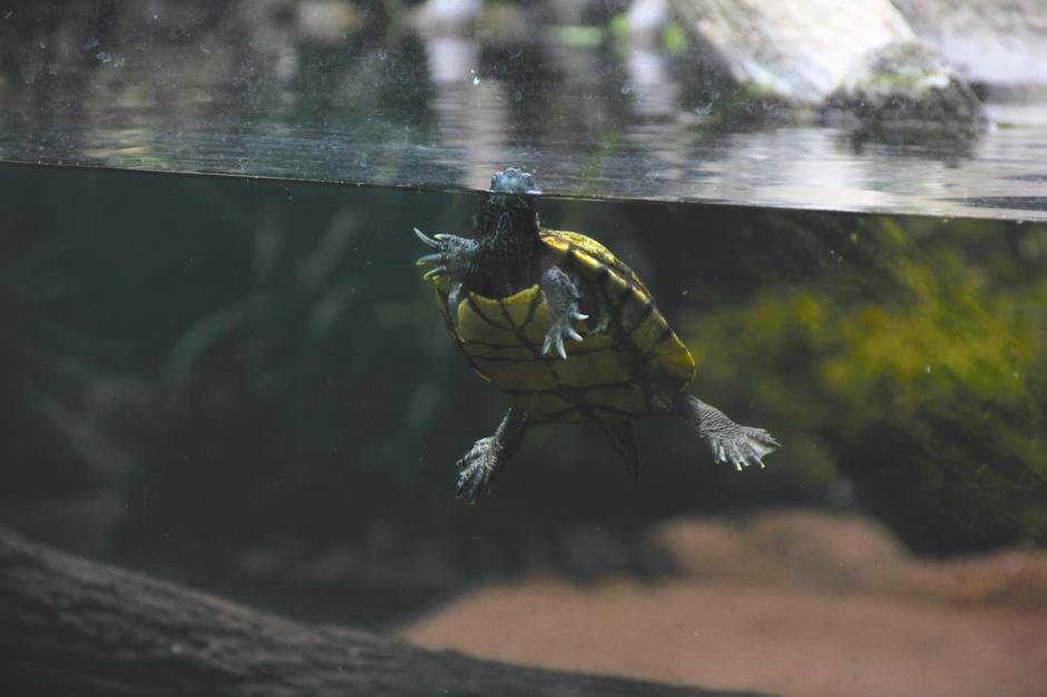 El zoológico La Aurora es uno de los lugares favoritos de muchos salvadoreños. (Foto: Fredy Hernández/Soy502)