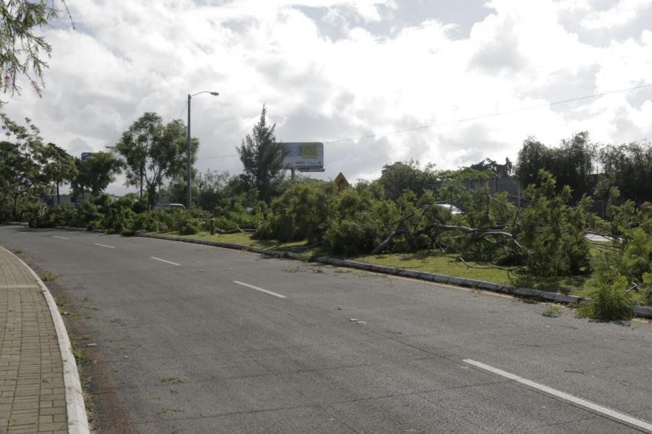 Un grupo de 15 personas taló los árboles que se encontraban en el bulevar Juan Pablo II. (Foto: Alejandro Balán/Soy502)