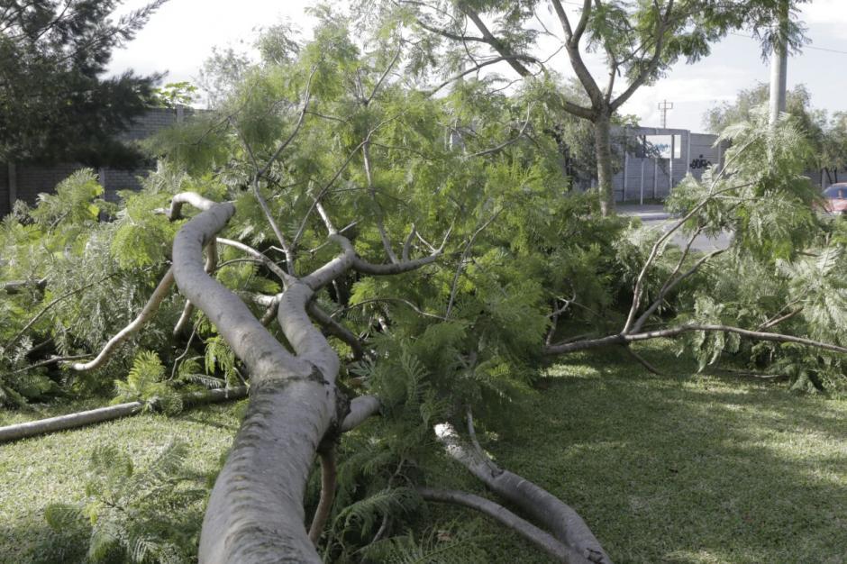 Las ramas obstruyeron el tránsito temporalmente. (Foto: Alejandro Balán/Soy502)