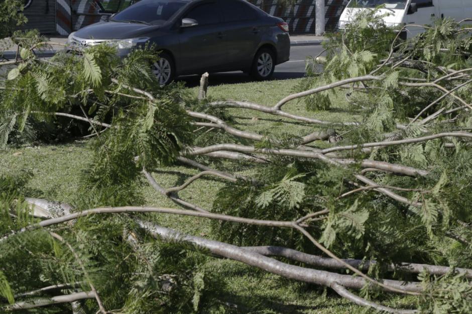 Según las autoridades, uno de los arrestados dijo que cortaron los árboles para leña. (Foto: Alejandro Balán/Soy502)