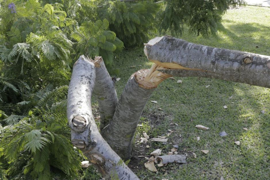 Sin embargo, otros manifestaron que fueron contratados por una empresa para talar los árboles. (Foto: Alejandro Balán/Soy502)